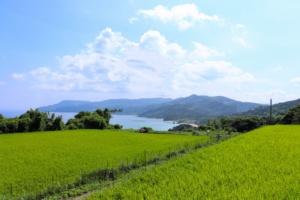 自然農法玄米の森の唱公式サイト