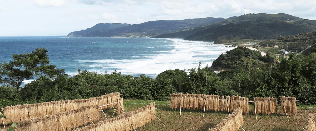 はぜかけ、自然農法玄米
